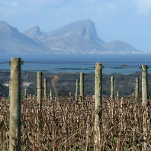 SA Wine Harvest 2018: Big challenges in the vineyard, big surprises in the cellar
